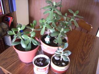 Jade Collection May15th 09 .jpg