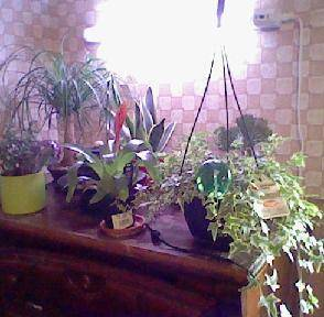 Houseplant collection growing.JPG