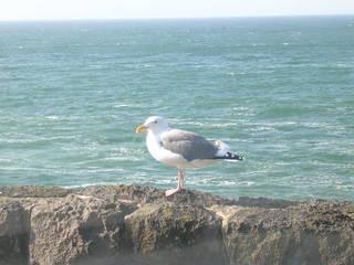 Coast pictures 065.JPG