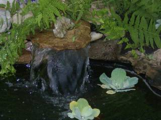 dogs and new water feature 014.jpg