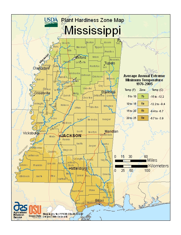 Mississippi (MS) USDA Zone Map